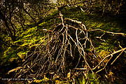 It was a little bizarre to find this dead tree collapsed in the middle of a tight-knit copse. Nothing else seemed dead, but this really had completely collapsed, falling towards the gurgling brook. Its fingers moved delicately in the wet ravine, but apart from that there was no life left in it.