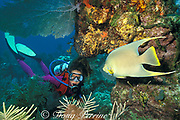 diver and blue angelfish,<br /> Holacanthus bermudensis,<br /> Biscayne National Park, off Miami,<br /> South Florida ( Western Atlantic Ocean )  MR 32