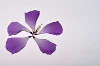 DECONSTRUCTED FLOWER