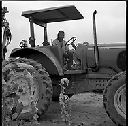 Undocumented Mexican workers pick tobacco in the sweltering heat of the eastern North Carolina tobacco fields. Many work barefoot in the mud exposing their feet to a toxic mixture of pesticides and nicotine which can cause their feet to turn black. Tractor operator Thomas McDaniel formerly picked tobacco;he has been operating the tractor at Tony Yang's 750 acre farm for 20 years