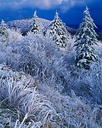 Departing storm with covering of rime ice on red spruce and other vegetation, Yew Mountains, Monongahela National Forest, West Virginia.