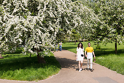 © Licensed to London News Pictures. 12/05/2016. LONDON, UK.  A couple walking through Green Park during warm sunny weather at lunchtime.  Photo credit: Vickie Flores/LNP