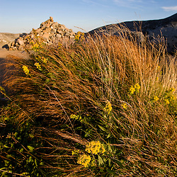 Goldenrod blooms near the summit of Mount Monadnock in New Hampshire's Monadnock State Park.