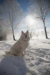 Dog sitting on snow covered landscape, Eichenau, F¸rstenfeldbruck, Bavaria, Germany,
