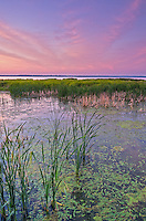 Reeds shake in the wind as the colors of sunrise fill the sky above. This view is from the boardwalk at Emiquon National Wildlife Refuge.<br />