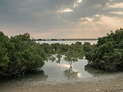 View of the mangrove at sunset on Sir Bani Yas, the largest natural island in the United Arab Emirates. Thanks to decades of conservation work and ecological investment, the island is now home to thousands of large free-roaming animals and several million trees and plants. A bird sanctuary as well as a wildlife reserve, Sir Bani Yas showcases nature through activities such as adventure safaris, kayaking, mountain biking, archery, hiking and snorkeling.