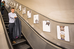 A passenger passes some of over 60 adverts in Clapham Common underground station, London, which have been replaced with pictures of cats as part of the 'Citizens Advertising Takeover Service, which aims to create a peaceful, unbranded space in the heart of London, free from commercial advertising.