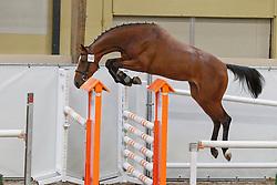 182 - Cleopatra B<br /> KWPN Paardendagen Ermelo 2010<br /> © Dirk Caremans
