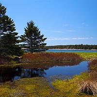 North America, Canada, Nova Scotia, Little River. Marsh at Black Duck Cove Day Use Park near Little Dover.