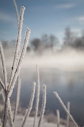 Twigs covered with frost, Eichenau, F¸rstenfeldbruck, Bavaria, Germany