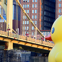 The first U.S. version of the 40-foot-tall rubber ducky looks nearly eye to eye with Pittsburghers lining up on the Sixth Street Bridge on September, 27, 2013 in Pittsburgh.  The 40 foot rubber ducky is artist  Florentijun Hofman of the Netherlands creation that kicks off the Pittsburgh Cultural Trust International Festivals of First.  UPI/Archie Carpenter