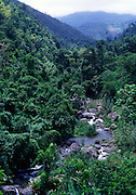 The Spanish River flowing through forest, Blue Mountains, Jamaica