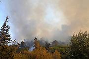 Wild fire in the city of Haifa, Israel in November 2016