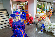 """05 JULY 2014 - BANGKOK, THAILAND:  Chinese style lion dancers perform in a Chinese owned business in Bangkok during a parade for vassa. Vassa, called """"phansa"""" in Thai, marks the beginning of the three months long Buddhist rains retreat when monks and novices stay in the temple for periods of intense meditation. Vassa officially starts July 11 but temples across Bangkok are holding events to mark the holiday all week.   PHOTO BY JACK KURTZ"""