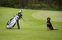 HERKENBOSCH - Hond loopt aan de riem mee met golfer.  Dog allowed. BurgGolf Herkenbosch . COPYRIGHT KOEN SUYK