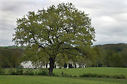 tree with agricultural land during spring season