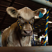 20-J009-Calf Check Ins