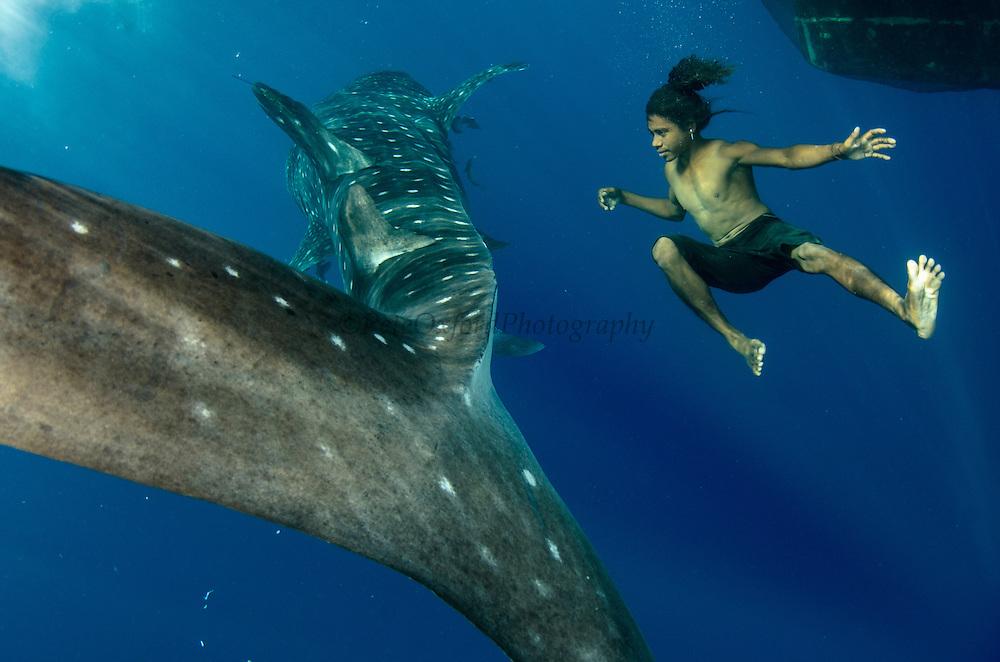 Whale Shark (Rhincodon typus) & local fisherman<br /> Cenderawasih Bay<br /> West Papua<br /> Indonesia