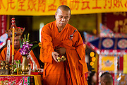 "09 AUGUST 2014 - BANGKOK, THAILAND:  A Vietnamese Mahayana Buddhist monk throws fruit to the crowd during a Ghost Month service at the Ruby Goddess Shrine in the Dusit section of Bangkok. The seventh month of the Chinese Lunar calendar is called ""Ghost Month"" during which ghosts and spirits, including those of the deceased ancestors, come out from the lower realm. It is common for Chinese people to make merit during the month by burning ""hell money"" and presenting food to the ghosts. At Chinese temples in Thailand, it is also customary to give food to the poorer people in the community.        PHOTO BY JACK KURTZ"