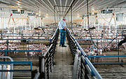 Farmer Ken Ries looks out over his hogs during a tour of hog farm in Ryan, Iowa, U.S. May 18, 2019. Picture taken May 18, 2019.  REUTERS/Ben Brewer