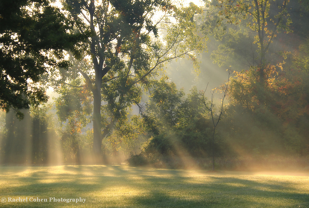That Wonderful Light<br /> <br /> Gorgeous Rays of light stream down from above on a late summer morning with fog!