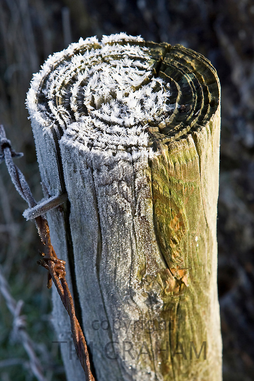 Hoar frost covered wooden barbed wire fence post, Oxfordshire, England, United Kingdom