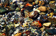 Low tide pools, teaming with life and color, among shells, lichens and seaweed.