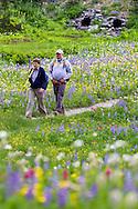 2 adult hikers walk the trails around Tipsoo Lake's wildflower display in Mount Rainier National Park, Washington State, USA.