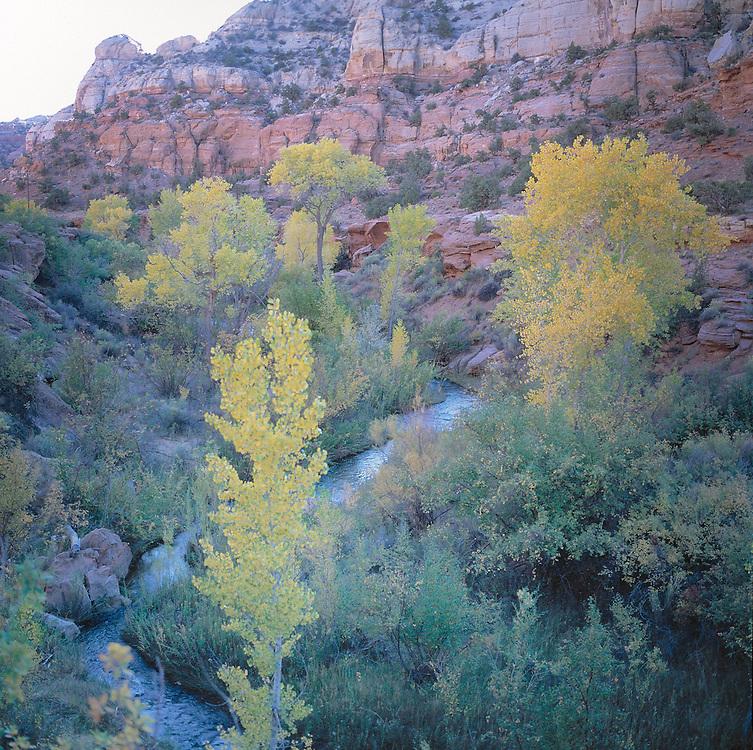 Fall colors along a stream near Escalenate, UT