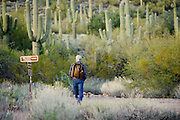 A lone hiker walks in between the cactus