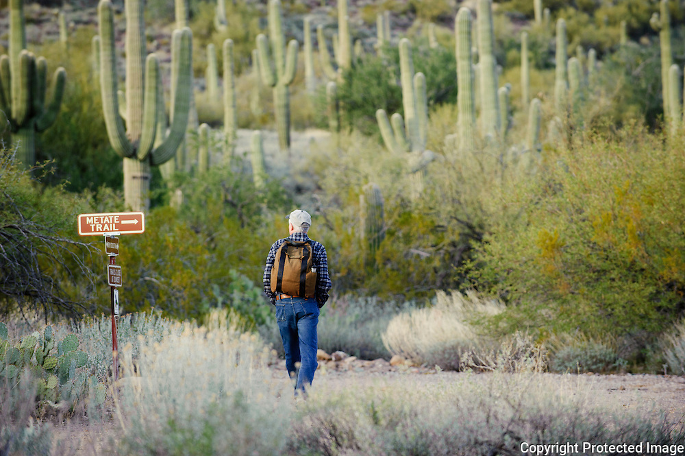 A lone hiker walks in between the cactus