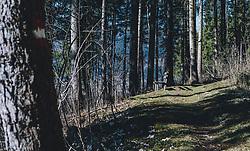 18.03.2020, Kaprun, AUT, tägliches Leben mit dem Coronavirus, im Bild eine Holzbank an einem schmalen Weg in einem Wald bei Sonnenschein. Für ganz Österreich wurde eine Ausgangsbeschränkung der Bundesregierung ausgesprochen // a wooden bench on a narrow path in a forest in sunshine. The Austrian government is pursuing aggressive measures in an effort to slow the ongoing spread of the coronavirus, Kaprun, Austria on 2020/03/18. EXPA Pictures © 2020, PhotoCredit: EXPA/ Stefanie Oberhauser