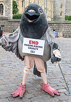 """""""Your Majesty, Stop Racing Us to Death!"""", a giant beaten and bruised """"pigeon"""" on crutches protested  outside Windsor Castle   PETA Calls On the Queen to Cut Ties With Pigeon Racing After Exposé Reveals Royal Birds Die at International Race Photo by Brian Jordan"""