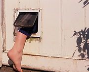 A793Y4 Bare foot climbing through a cat flap