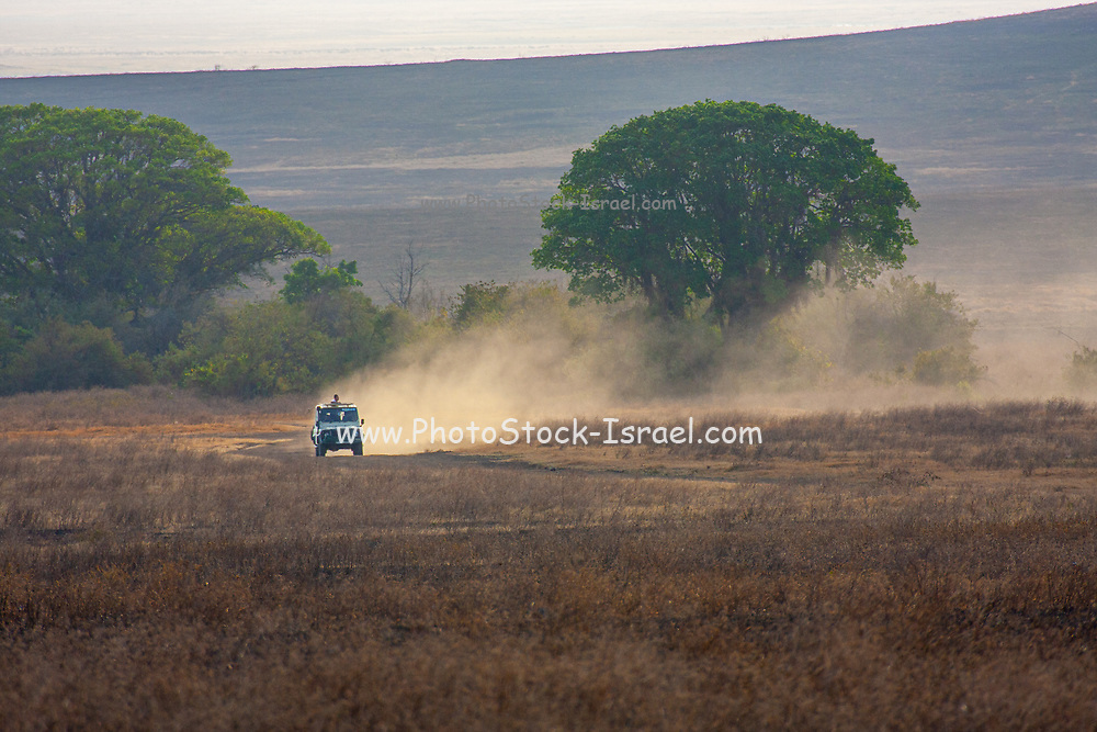 Safari Jeep in Ngorongoro Conservation Area, Tanzania
