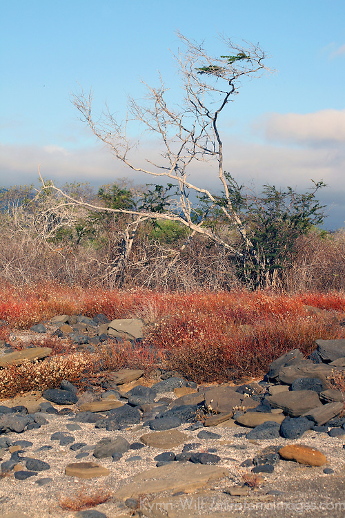 South America, Ecuador, Galapagos Islands, Santiago Island, James Island, Port Egas. Scenic landscape and flora of Santiago Island (James Island).