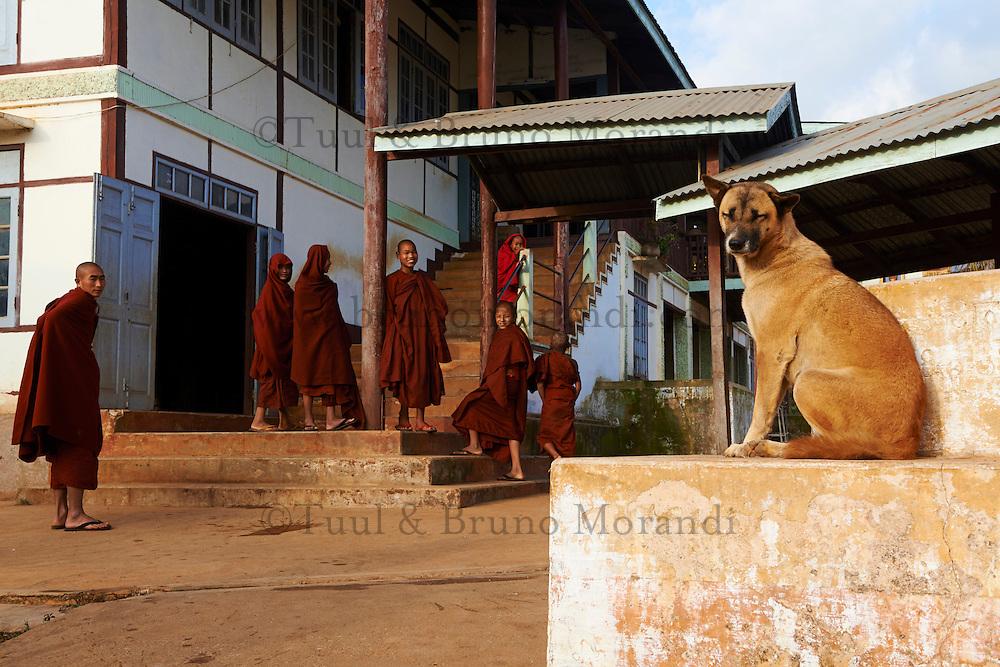 Myanmar (ex Birmanie), Province de Shan, Pindaya, moines du monastere de Pindaya // Myanmar (Burma), Shan province, Pindaya, monk at Pindaya monastery