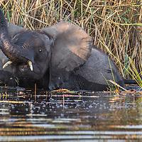 Botswana & South Africa