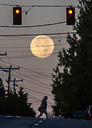 The tail end of the Supermoon photographed the next morning after the full moon's eclipse the night before.   This is looking down NE 95th Street in north Seattle right at sunrise when the moon soon disappeared behind the Olympic mountains in the west. (Steve Ringman / The Seattle Times, 2015)