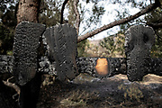Burnt fence. The Woolsey wildfire started on November 8, 2018 and has burned over 98,000 acres of land, destroyed an estimated 1,100 structures and killed 3 people in Los Angeles and Ventura counties and the especially hard hit area of Malibu. California, USA