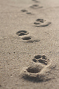 Bare footprints in the sand, Nauset Beach, Cape Cod National Seashore, Orleans, Massachusetts.