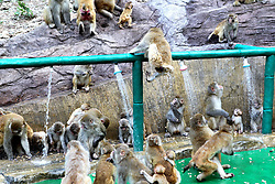August 3, 2017 - Jiyuan, Jiyuan, China - Jiyuan, CHINA-August 3 2017: (EDITORIAL USE ONLY. CHINA OUT) ..Macaques enjoy cool at Wulongkou Scenic Area in Jiyuan, central China's Henan Province, August 3rd, 2017. (Credit Image: © SIPA Asia via ZUMA Wire)