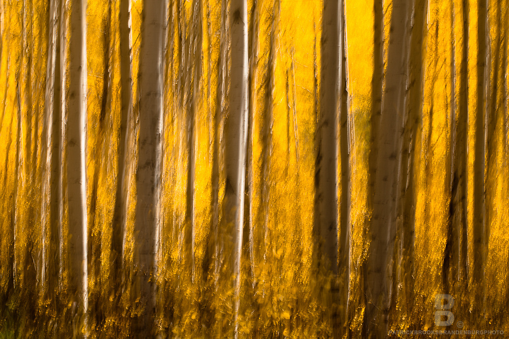Abrtact photograph of aspen trees in the fall using long exposure and movement.