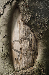 Heart shape carved on a tree trunk, Bavaria, Germany