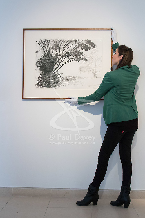 """Christies, St James, London, March 4th 2016. A gallery assistant straightens David Hockney's """"Kilham to Rudston"""", charcoal on paper from 2008 at the preview for the It's Our World charity auction at Christie's. Over 40 leading artists including David Hockney, Sir Antony Gormley, David Nash, Sir Peter Blake, Yinka Shonibare, Sir Quentin Blake, Emily Young and Maggi Hambling have committed artworks to the It's Our World Auction in support of The Big Draw and Jupiter Artland Foundation, to be sold at Christie's London on 10 March 2016.<br />  ///FOR LICENCING CONTACT: paul@pauldaveycreative.co.uk TEL:+44 (0) 7966 016 296 or +44 (0) 20 8969 6875. ©2015 Paul R Davey. All rights reserved."""