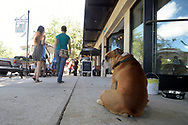 A dog sits on the sidewalk outside a storefront on Park Ave. in Winter Park, Fla., Friday, Oct. 30, 2015. (Phelan M. Ebenhack via AP)
