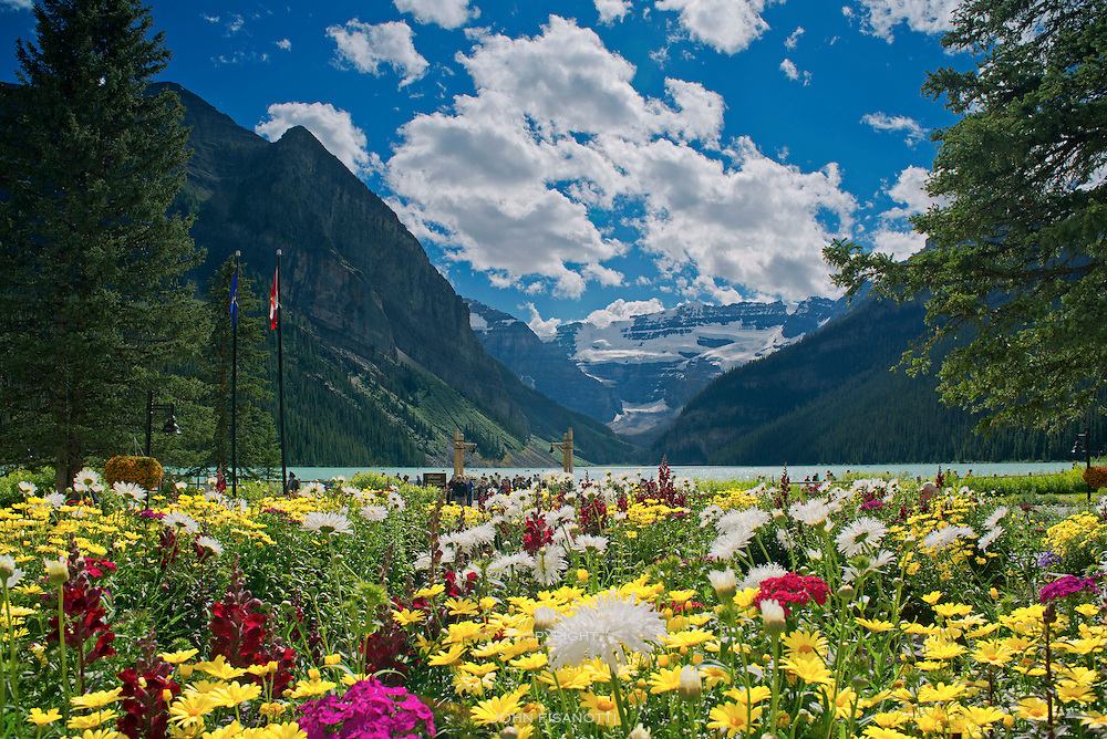 Summer Flowers on the grounds of the Lake Louise Resort