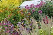 Private Garden near Denbigh - September