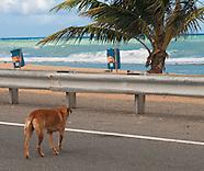 Puerto Rico Alliance for Companion Animals