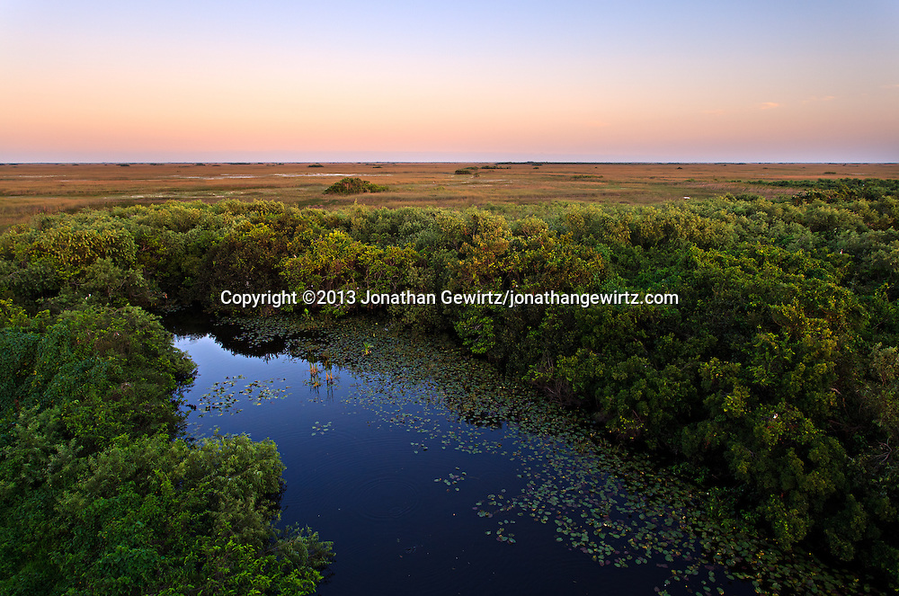 The eastern end of the pond at the Shark Valley observation tower in Everglades National Park, Florida. <br /> <br /> WATERMARKS WILL NOT APPEAR ON PRINTS OR LICENSED IMAGES.<br /> <br /> Licensing: https://tandemstock.com/assets/31242025